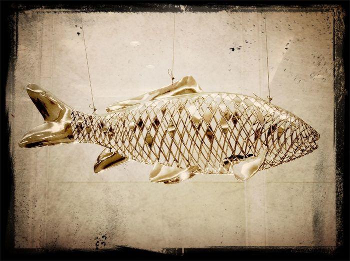 A Big Big Fish