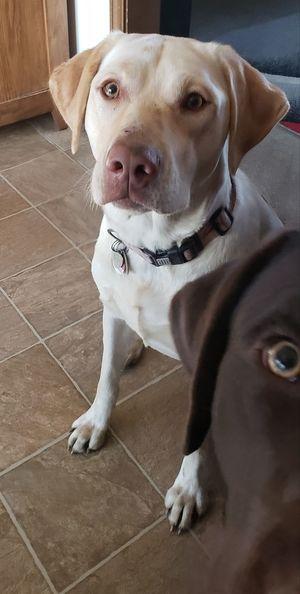 photobomb! Pets