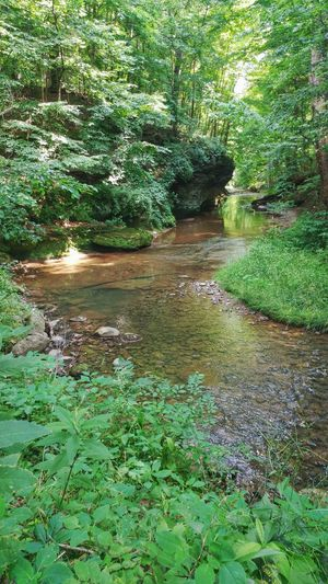 Ohio Nature Beauty In Nature Outdoor Photography Outdoors Scenics Scenery Stream Water Trees