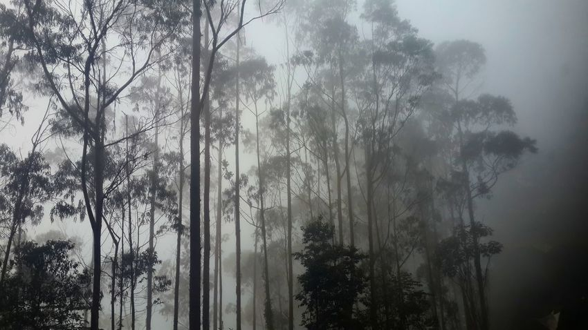 Tree Sky Nature Growth Scenics Fog Tranquility Day No People Beauty In Nature Low Angle View Cloud - Sky Outdoors Sun Travel Destinations Tranquil Scene Tranquility Colombia Beauty In Nature RainDrop Rainy Season Tree Nature Weather EyeEmNewHere Miles Away Miles Away The City Light