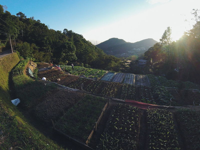 Daily Project The View And The Spirit Of Taiwan 台灣景 台灣情 Sky Farm Farmer Light And Shadow Green Gopro EyeEm Gallery Farming Outdoors Mountain Agriculture Terrace Tea Farm Tea Vegetable Origin Grateful Countryside Countrylife The City Light Farm Life Healthy Been There.