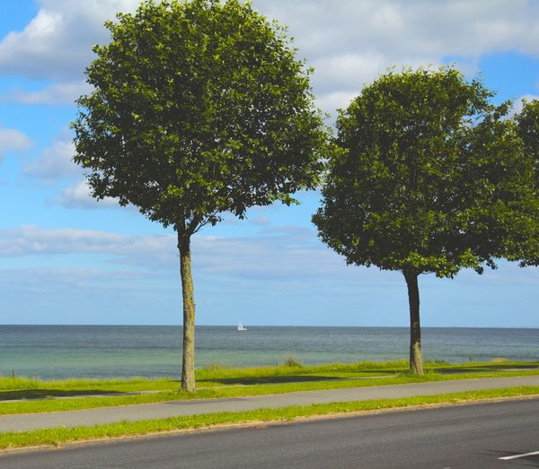 Trees by sea against sky