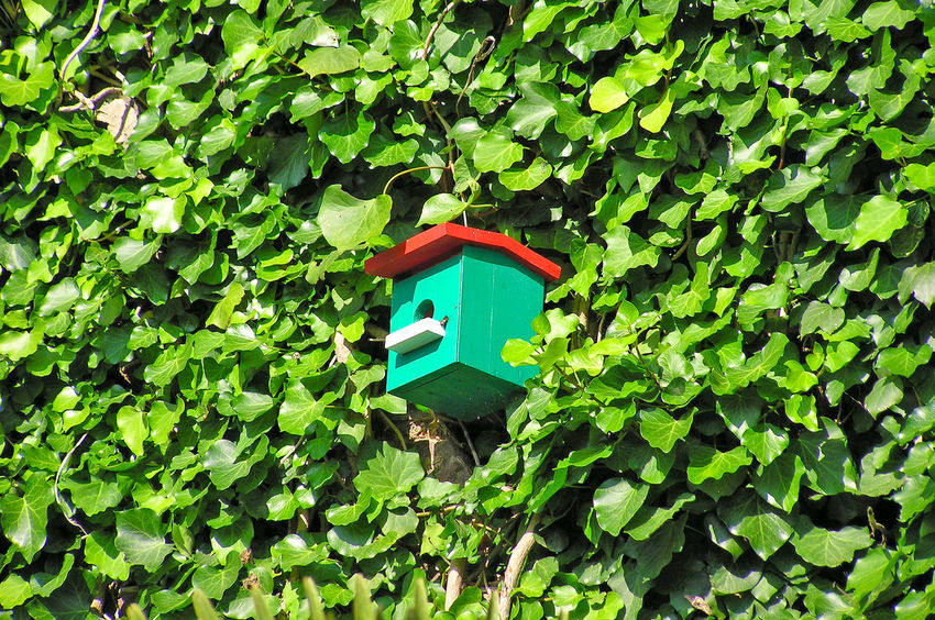 Beauty In Nature Bird Bird House Bird Houses Birds Creeper Plant Day Ecologic Ecological Ecology Environment Environment Protection Environmental Conservation Green Color Growth House Bird Ivy Ivy Leaves Leaf Nature No People Outdoors Plant Protection Tree