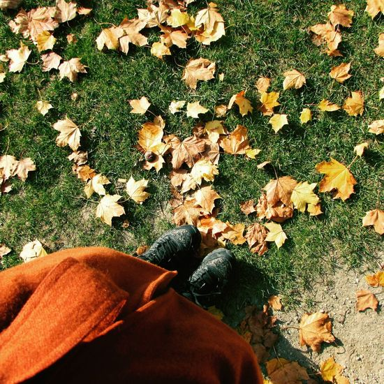 Human Leg Nature Bélgica Belgique Hojas Secas Maple Tree Green Nature Close-up One Person Colors Vida Plant Colores Y Texturas