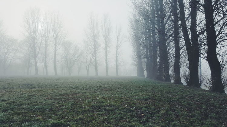 Tree Nature Fog Tranquility Landscape No People Scenics Outdoors Growth Foggy Morning Autumn Misty Tranquility Misty Morning Mistyfoggymilkymoody The Great Outdoors - 2017 EyeEm Awards
