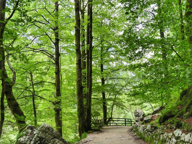 Tree Green Color Nature Forest Beauty In Nature Iloveslovenia Slovenia ❤ Slovenia Path Natureperfection