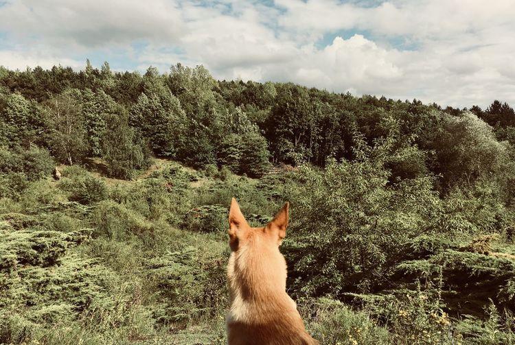 Mammal One Animal Animal Themes Animal Plant Tree Sky