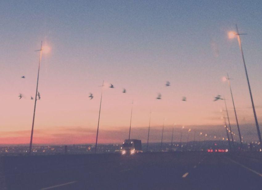 Atmosphere Atmospheric Mood Birds City Life Dramatic Sky Flying Road Sky Street Light Sunset Suspension Bridge Transportation Ponte Vasco Da Gama