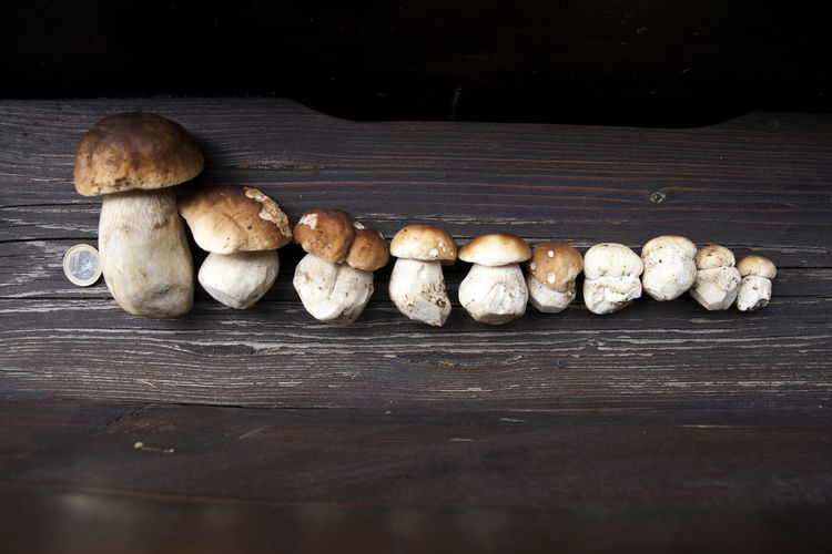 Conceptual close-up of mushrooms of various sizes