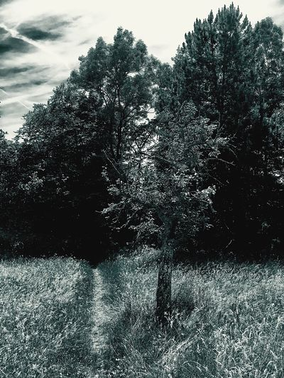Tree Nature Growth Tranquility No People Outdoors Grass Landscape Beauty In Nature Sky Stonegraphix Bianco E Nero Noir Et Blanc Black And White The Great Outdoors - 2017 EyeEm Awards EyeEmNewHere Sentier Sentiero