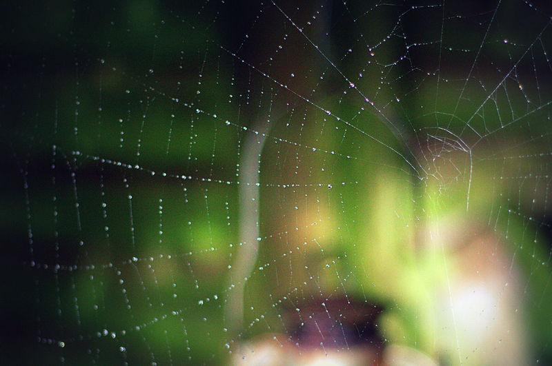 Delicate perfection. No trace of Incy Wincy though? Backgrounds Beads Beauty In Nature Close-up Cobweb Colourful Day Delicate Droplets Focus On Foreground Fragility Freshness Full Frame Green Color Nature Nature Nature On Your Doorstep Nature Photography Nature_collection Naturephotography No People Pattern, Texture, Shape And Form Patterns In Nature Spider Web Tranquility