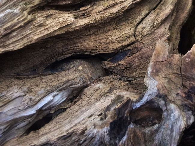 Full Frame Rock Rock - Object Geology Solid Backgrounds Rock Formation Nature Pattern Textured  Tree Close-up Beauty In Nature Outdoors Natural Pattern Land