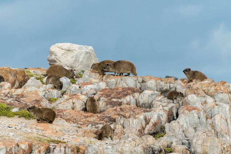 Close-up of animals on rock against sky
