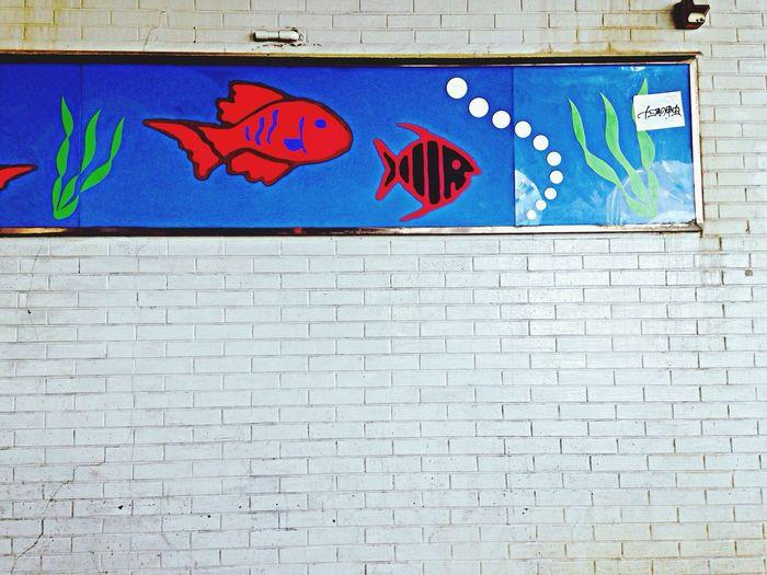 Japan Wall Fish Enjoying Life