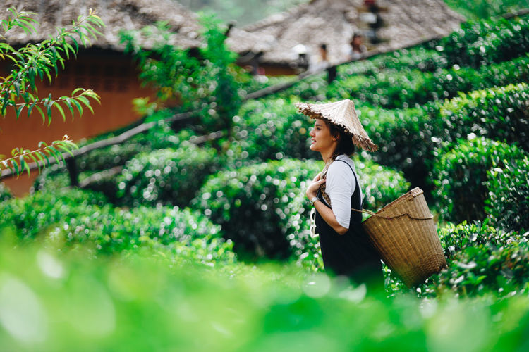 Hat One Person Real People Container Basket Clothing Plant Women Adult Green Color Growth Lifestyles Nature Day Asian Style Conical Hat Selective Focus Casual Clothing Occupation Holding Outdoors Farmer