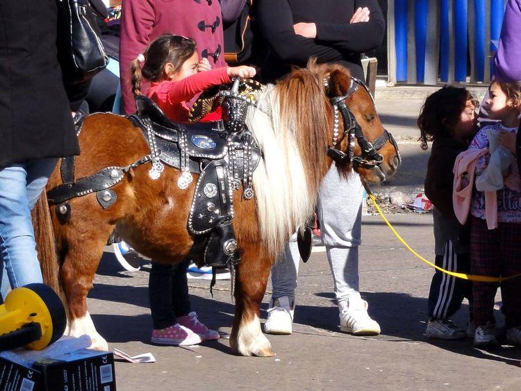 Taking Photos Kids Being Kids Mini Horse