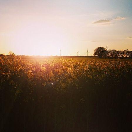 Heimat ist, wo der Raps blüht. Dorfkind Herzogtumlauenburg Canola Field Sunset Country Life Windpower