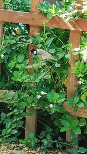 bird 🐦 Zoom Zoom In Note5 Note5photography Note5 Samsung Note5camera Sumsung اخضر Samsung طبيعة Natural Natural Beauty Flower Bird Journey Leaf Ivy Wood - Material Close-up Plant Green Color Green Greenery Woods Growing Young Plant