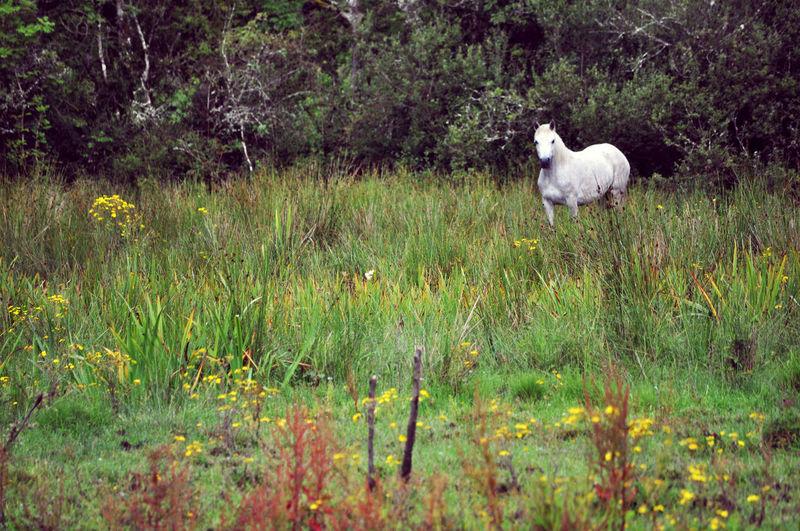 Fairy tale Standing Field Green Color Herbivorous Vertebrate Horse Irish Horse Animal Domestic Animals Pets Livestock