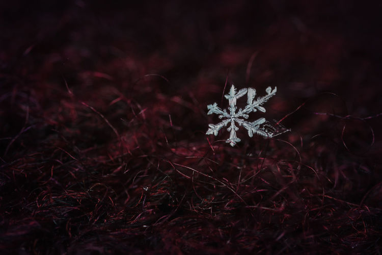 Alone, but beautiful Beauty In Nature Close-up Detail Flake Flake,s Nature No People Outdoors Snowflake Sweater First Eyeem Photo