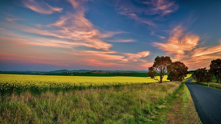 Empty road by flowering field against sky during sunset