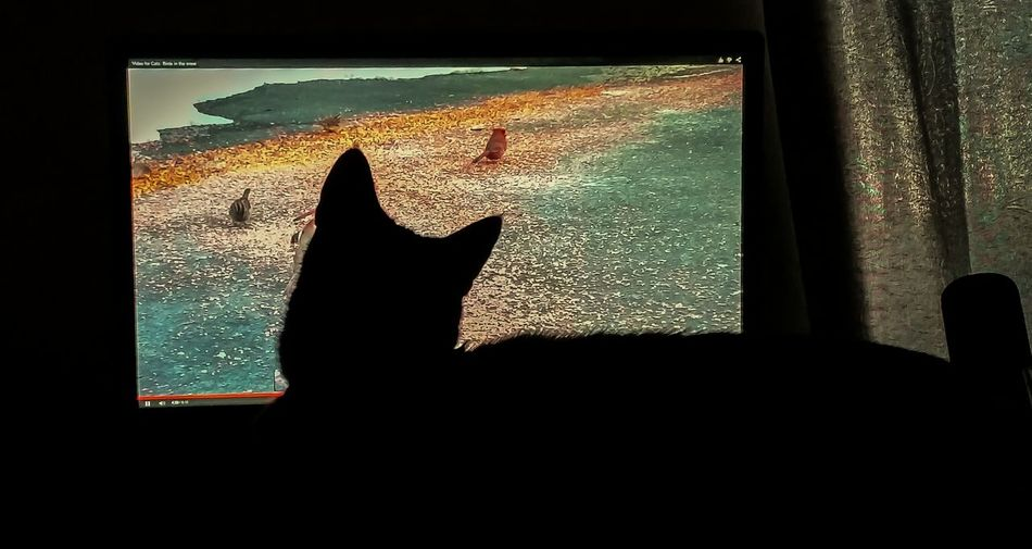 Zorro watching his favorite YouTube video Pets Pet Photography  Cats Youtube A6000
