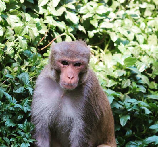 Portrait of monkey on plant