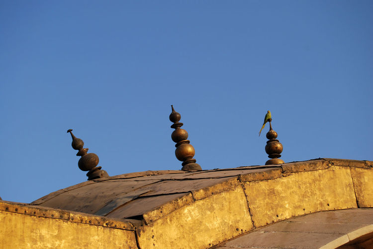 Parakeet on roof of agra fort