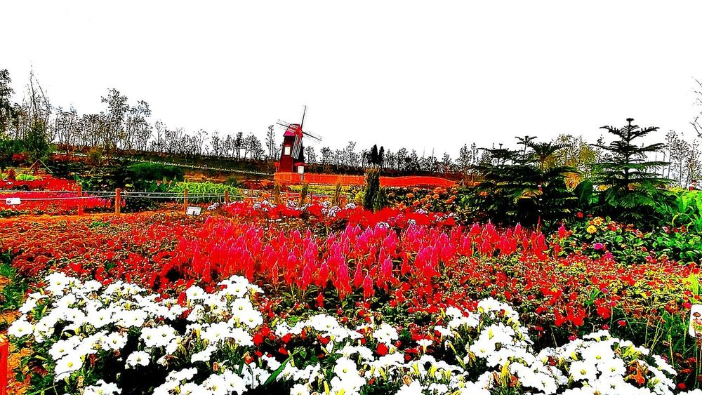 Flower Garden Flowrrs And Plants Green The Colour Of The Nature Landscape Nature Photography