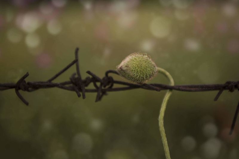 Plant Focus On Foreground No People Day Outdoors Close-up Nature Bolu..TURKEY EyeEm Best Edits EyeEm Gallery Bolu  Flower Beauty In Nature Fragility Green Color Plant Growth Leaf Petal Beauty Bolupictures Bolu  Bolu TURKEY Bolu