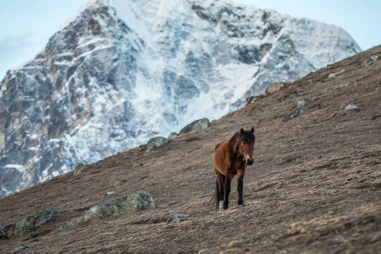 Horse standing on mountain during winter