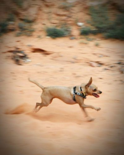 High angle view of dog running