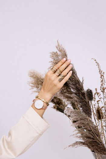 Cropped hand of woman holding herbarium against white background
