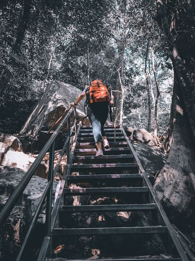 Rear view of man on staircase in forest