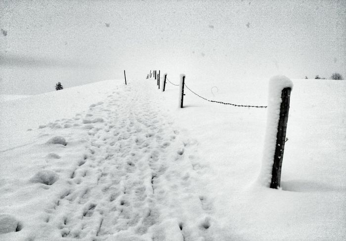 Snow Snow Day Snow Drift Winter Landscape