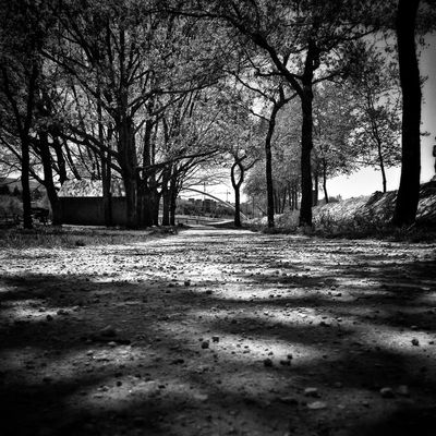 Blackandwhite Landscape Trees Eye4photography