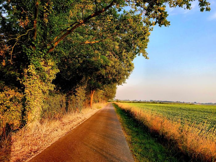 Sunny landscape with a road with trees on one side and a farmfield on the other side Plant Tree Nature Beauty In Nature Growth Road Sky The Way Forward Tranquility Sunlight Scenics - Nature Day Land Direction Diminishing Perspective Tranquil Scene No People Outdoors Field Landscape