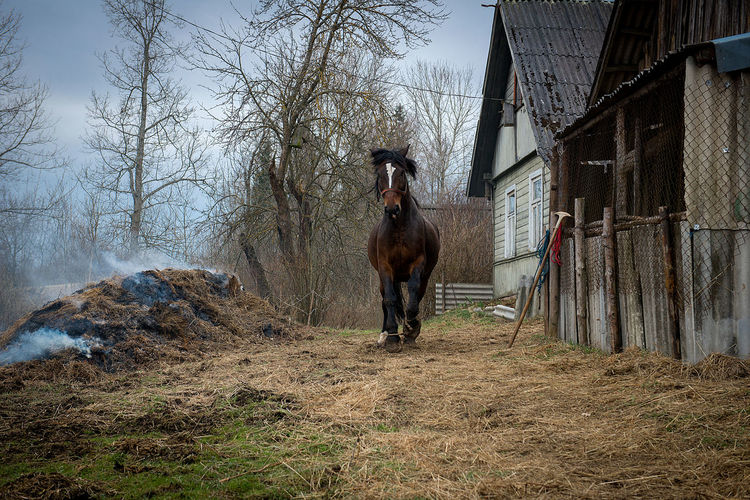 Agriculture Animal Themes Backgrounds Countryside Court Day Domestic Animals Farm Horse Latvia Mammal Mendicity Misery Nature Neglected No People Old House Outdoors Poverty Springtime Tree Yard EyeEmNewHere Europe The Baltics