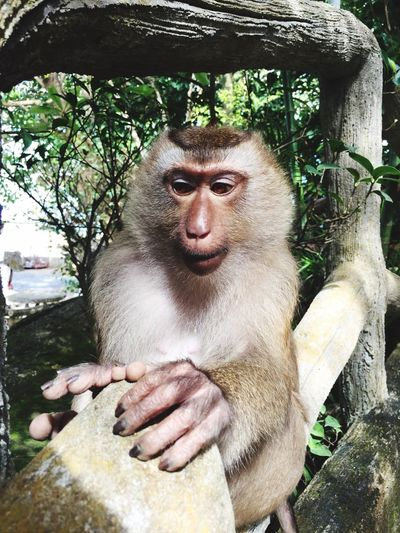 Tree Monkey Mammal Sitting Animal Themes One Animal Animals In The Wild Portrait Primate Day Nature Outdoors Close-up No People Baboon