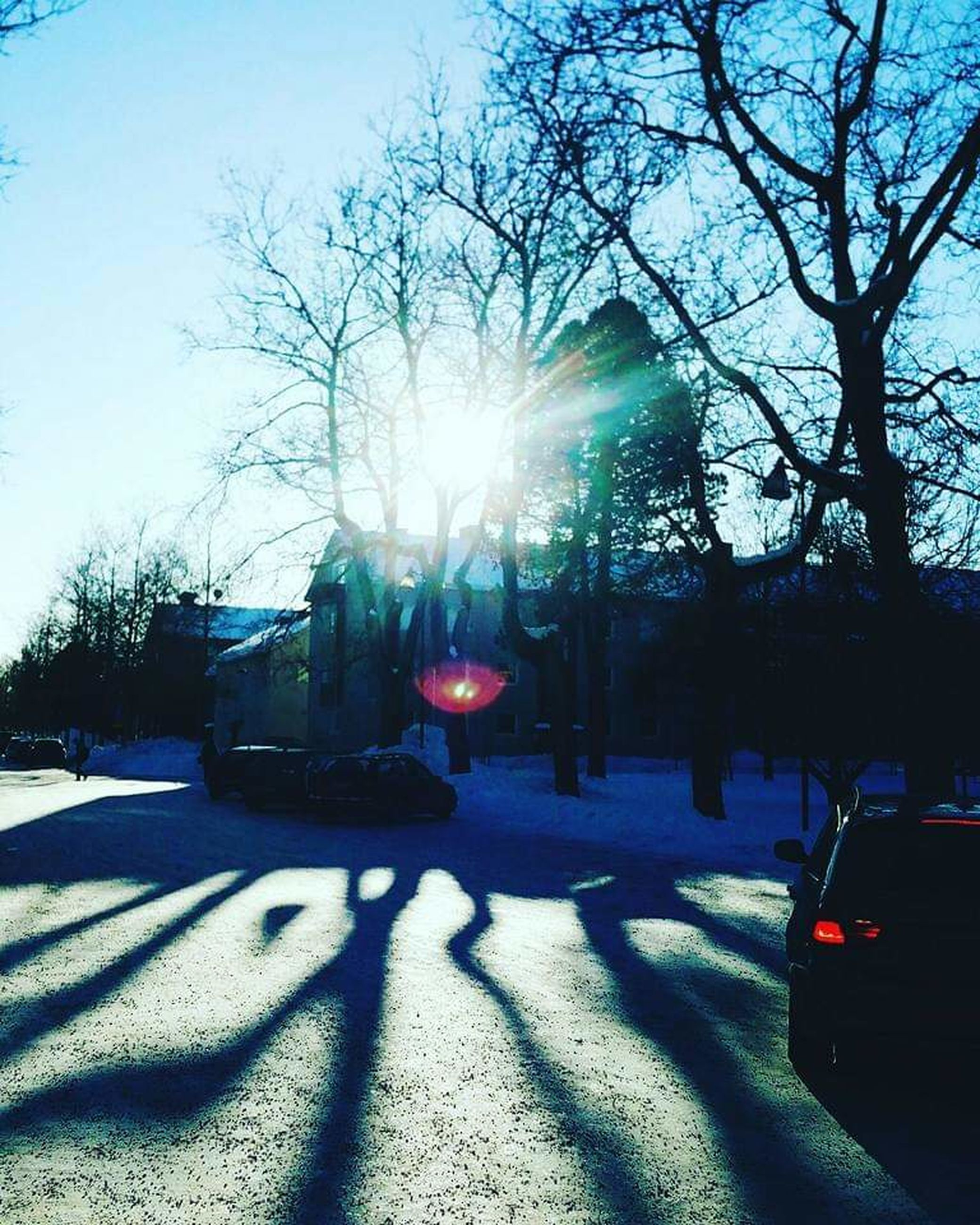 tree, sunlight, nature, plant, transportation, car, shadow, motor vehicle, mode of transportation, city, street, sky, road, snow, land vehicle, lens flare, architecture, light, sunbeam, day, outdoors, bare tree, morning, vehicle, building exterior, no people, winter, illuminated, built structure, back lit, lighting, cold temperature, city life, street light, sunny
