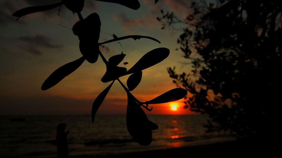 dusk always teaches me the meaning of giving up Amazing Photography Landscape Beauty In Nature My Best Travel Photo INDONESIA Sunset Beauty Night Sunset Hanging Close-up Sky Bat - Animal Spread Wings Seagull Dragonfly Chinese Lantern Festival UnderSea Butterfly - Insect Jack O Lantern Chinese Lantern Calm Shore
