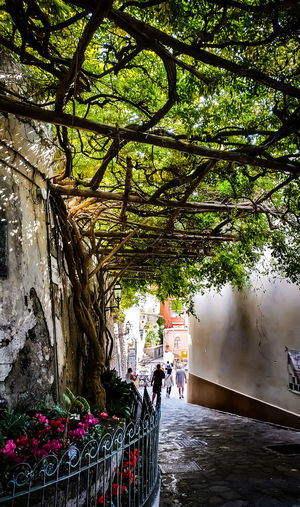 Positano Flower Flowers Streetphotography Street Coast Italy Boulevard Nature Nature_collection Nature Photography Photographer Photography Photo Point Of View View Vine Vineyard Oldtown Colorful Stunning Amalfi Coast Shadow Shadows & Lights Artistic Plant Plant Life Tree Water Spraying