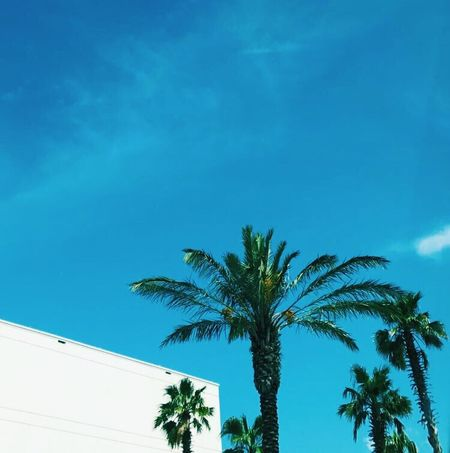 Palm Tree Tree Blue Sky Low Angle View Clear Sky Building Exterior Casino EyeEmNewHere