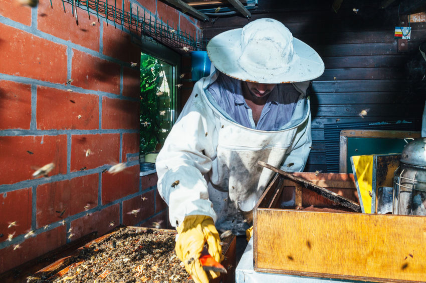The Week On EyeEm Nest Healthy Hive Apiary Pollen Beehive Beekeeper Beekeeping Honey Bee Extraction Agriculture Production Bees Keeping Honey Honey Production Real People Honeycomb Summer Food Bees Insect Organic Beeswax Smoker