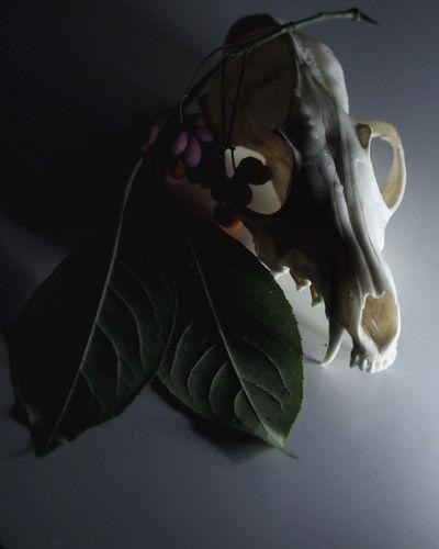 Leaf Close-up
