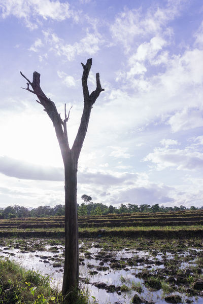 Bare Tree Beauty In Nature Branch Dead Tree Dry Landscape Nature No People Old Outdoors Scenics Sky Tranquil Scene Tranquility Tree Tree Trunk