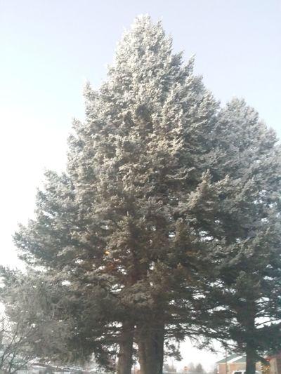 It's Cold Outside 406 Outside Cottonwood City Magical Trees