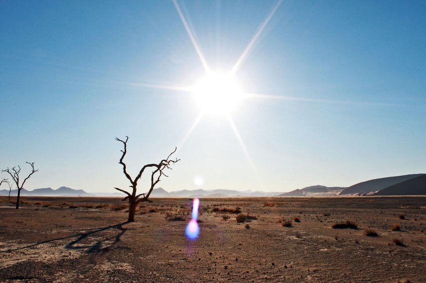 Africa Arid Arid Climate Arid Landscape Blue Sky Dessert Dune Dunes Heat Hot Landscape Namibia No Water Outdoors Outofnowhere Sand Sky Soussesvlei Sweat Tree Wildlife & Nature
