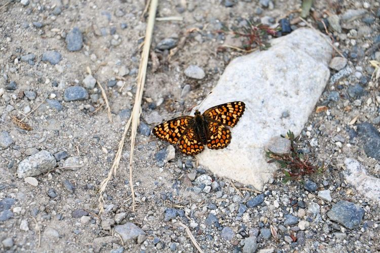Butterfly Nature Insect Insect Photography Macro Macro_collection
