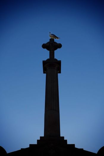 Bird Animal Seagull Contre-jour City Statue Sculpture Clear Sky Blue Cityscape Architectural Column History Politics And Government Symbol Pedestal Memorial Gravestone Tombstone Grave The End Death Cemetery Monument Graveyard Place Of Burial Fine Art Statue Symbolism